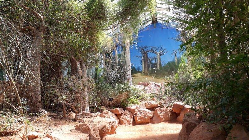 [L'AFRIQUE A LYON] La serre de Madagascar au Parc de la Tête d'Or